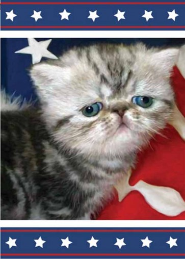 Patriotic Kitty   Garden Flag